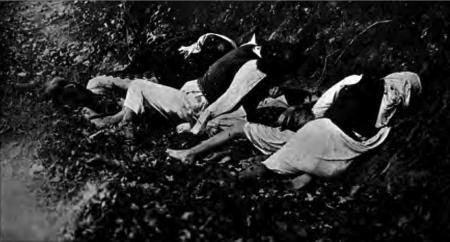 1914. Familie masacrată la Krivaja.